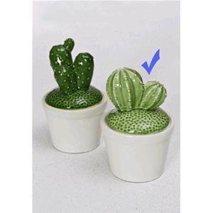 Rituali Domestici Vaso Scatolina Cactus