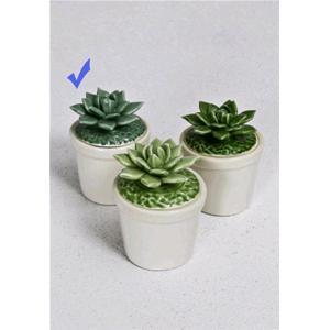 Rituali Domestici Vaso Scatolina Cactus Fiore